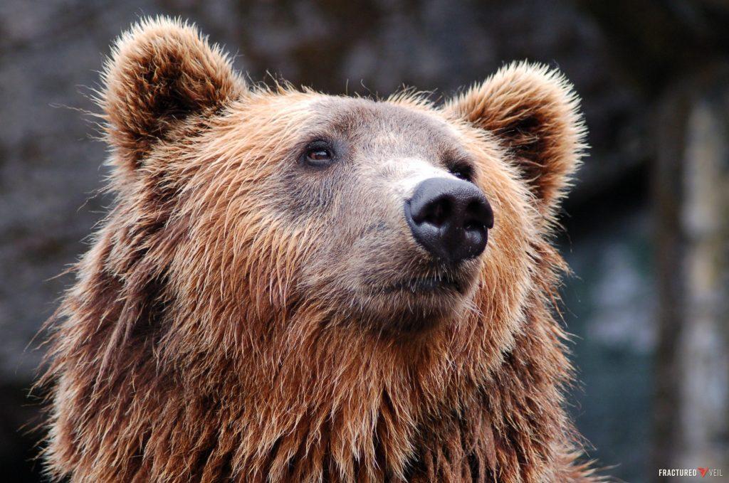 bearss.jpg