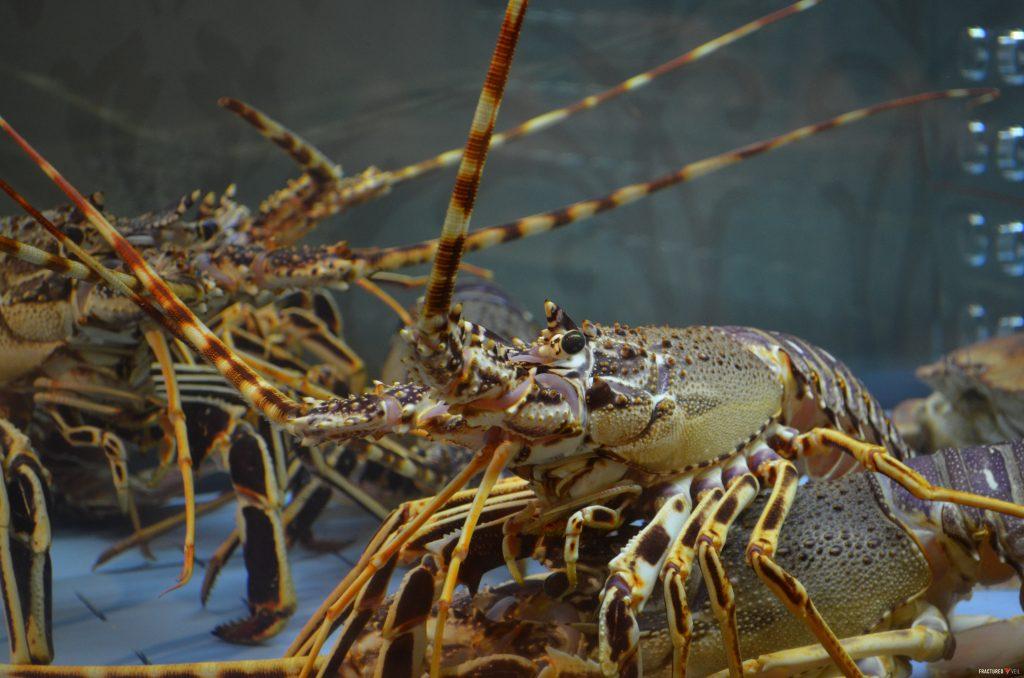 lobsterss.jpg