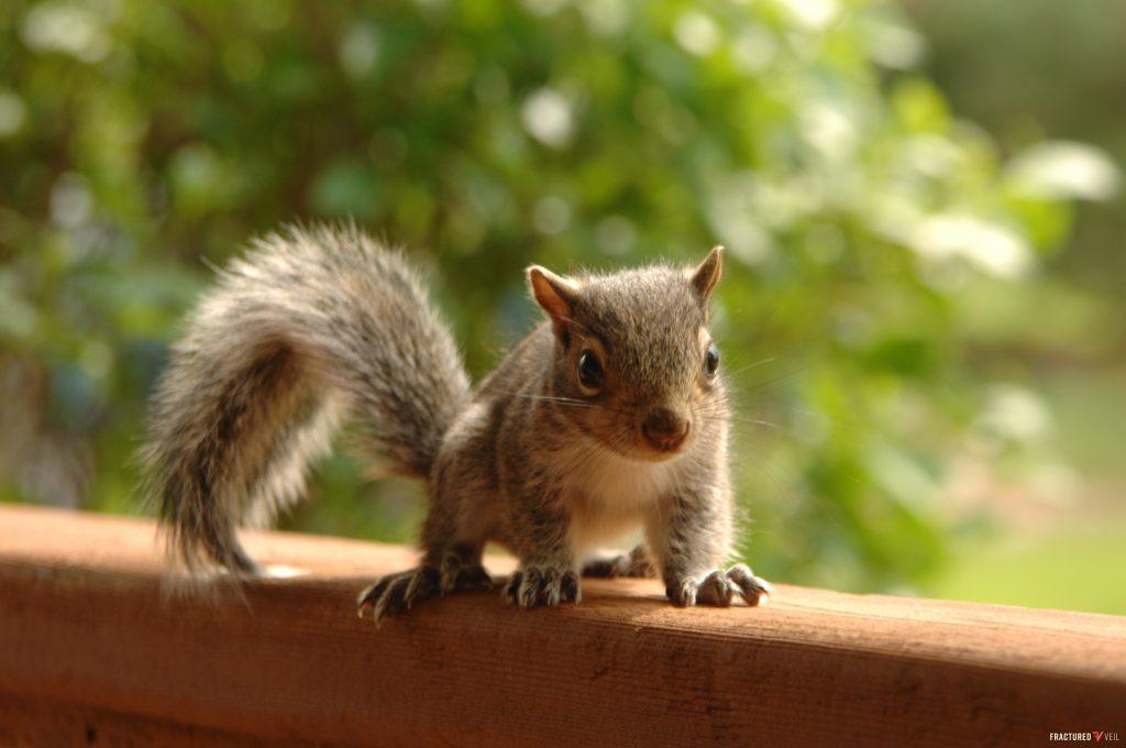 squirrly.jpg