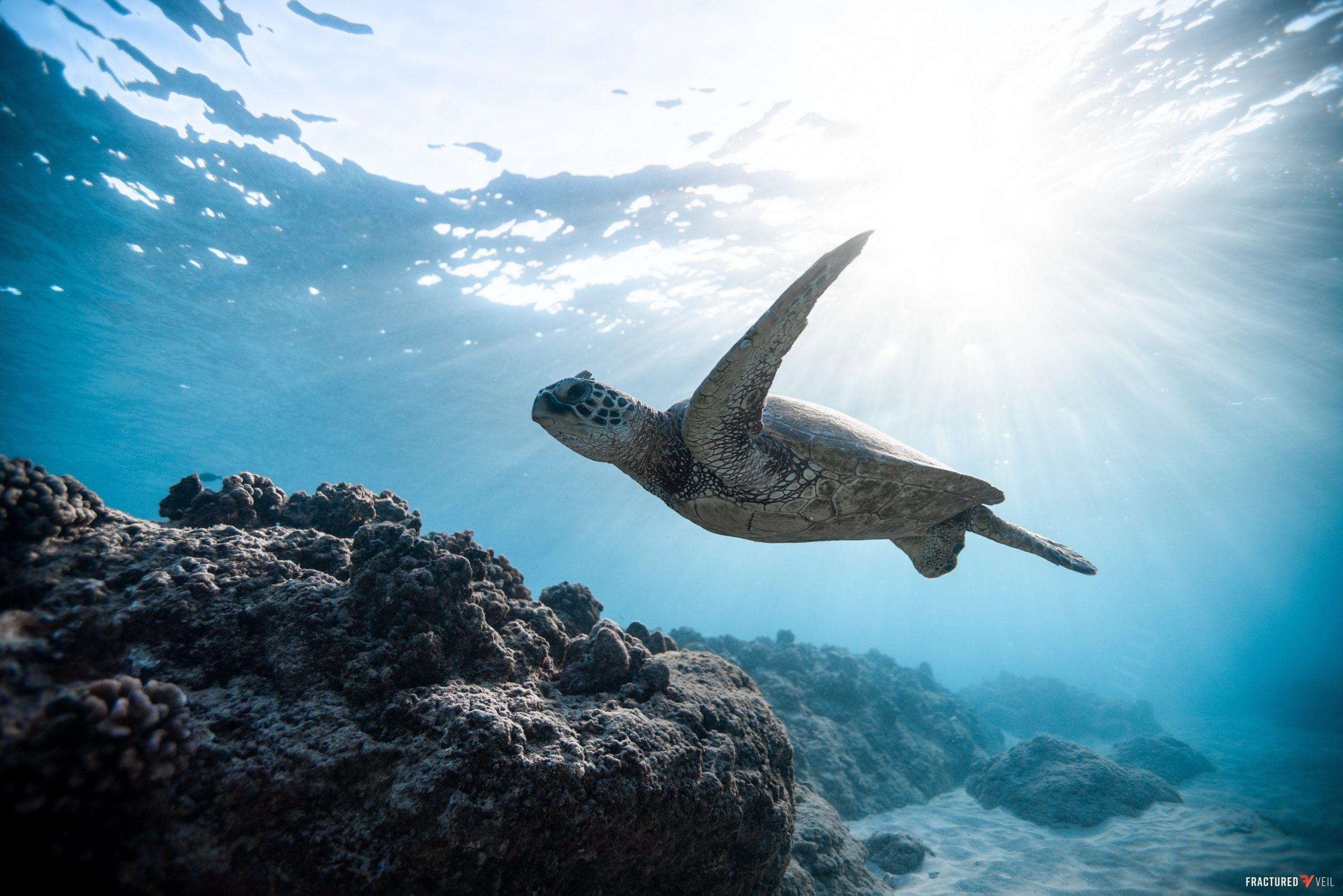 turtless.jpg